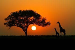 ثبت شرکت آفریقا